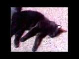 CAT RUN OVER BY A CAR! HIT & RUN