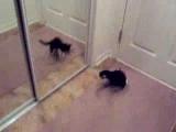 LOL! Kitten Attacks Mirror