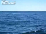 Giant Blue Whale Jumps Over Boat