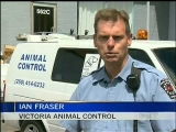 Dog Attack Puts Spotlight On Pit Bulls