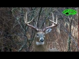 Hunting Whitetail Deer Buck Charges Hunter – Animal Attacks Dec 30