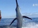Untamed & Uncut- Marlin Impales Face