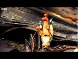 Attack of the killer fungi – Planet Earth – BBC