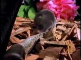 Animals Attack: Shrew vs. Snake