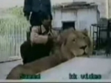 Dont Touch A Lions Paw