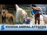 Vicious Animal Attacks: Rant About Wild Animals as Pets (Click link in DESC for playlist)
