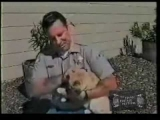 Painful Testicular Cat Attack on Live TV Ouch!