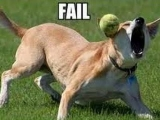 Funny Dogs FAIL Compilation