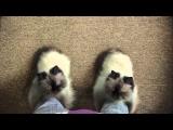 TEMPTATIONS TV Commercial: Boots (30 sec)