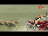 Funny Animal Attack – Cheetah VS Gazelle