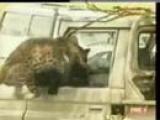 Animal Anarchy: When Animals Attack