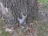 Drunk Squirrel Tries to Climb Tree – Break Fails