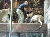 MGM lion attack in Las Vegas