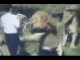 WTF: Lion Attacks Preacher