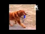 Adorable dog walks himself