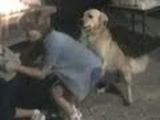 Funny Doggie Style Dance Moves