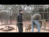 Animal Attacks Lion Attacks Journalist Caught On Tape