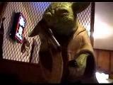 Drunk Yoda
