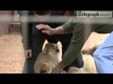 Animal Attacks 01 Lion Attacks Journalist