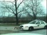 Dog [Pitbull] Attacks Police Car Rips Off Bumper!!