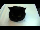 Cat Attack – very funny