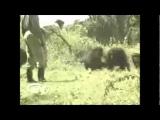 Animal Attacks!! compilation