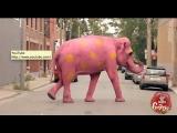 Pink Elephant Prank
